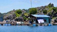 Une maison flottant de pêcheurs à Cat Ba