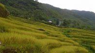 les rizieres en terrasse de Pu Luong