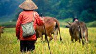 circuit voyage vietnam 11 jours