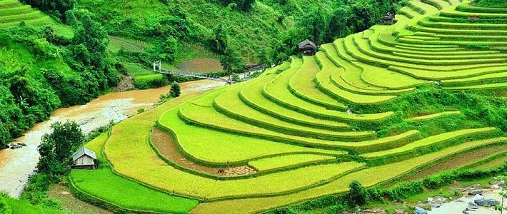 les rizières sapa vietnam
