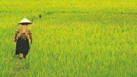 Séjour au Vietnam de luxe