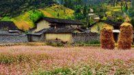 Visiter Ha Giang en quatre saisons