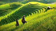 Voyage Sapa Vietnam