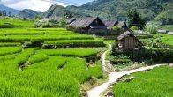 Randonnée autour de Sapa Lao Cai