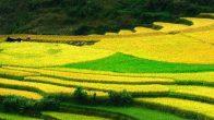 Saison des récoltes à Ha Giang