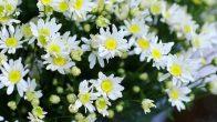 Voyage Nord Vietnam en saison des fleurs