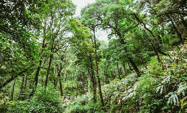 Parc national Hoang Lien