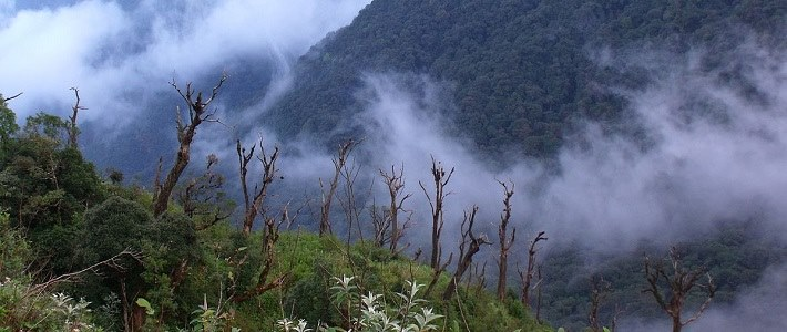 Visite parc national de Hoang Lien