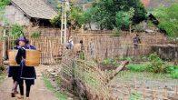 Village de Ban Ho à Sapa