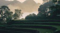 Visite réserve de Pu Luong