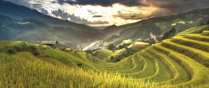 Rizières en terrasse à Ha Giang