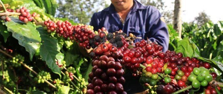 Cafe Buon Me Thuat du Vietnam