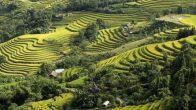 Rizières en terasse à Hoang Su Phi
