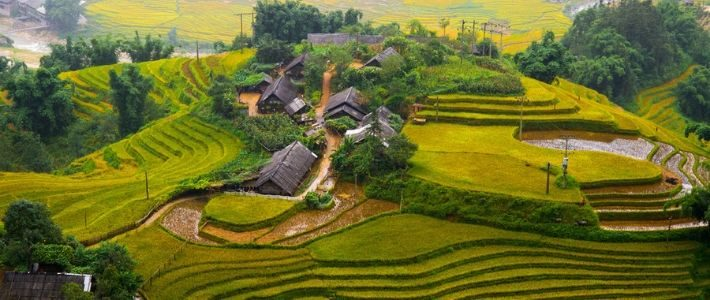 riziere en terrasse à ne pas rater au Vietnam