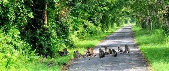 parc nationale de Phu Quoc Vietnam