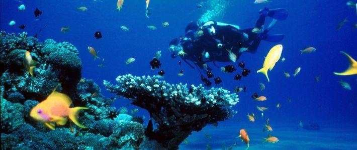 Plongée sous-marine à Nha Trang