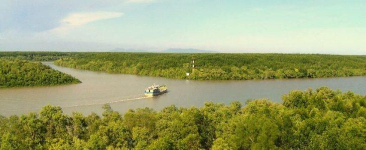 La mangrove Can Gio